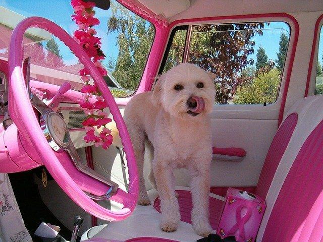 pes v růžovém autě