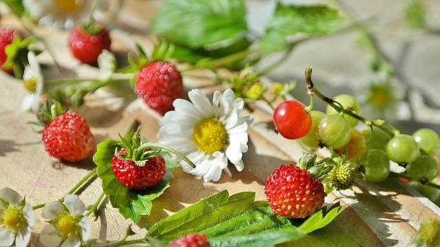 jahody a angrešt
