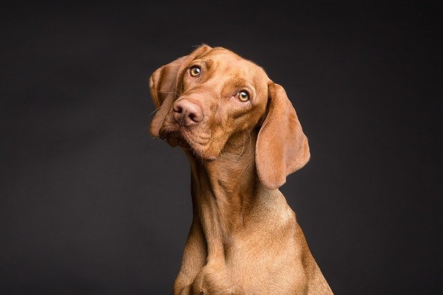 lovecký pes